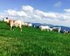 Caprette della Poieto Farm