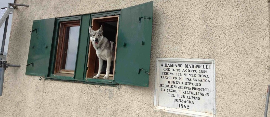 cane alla finestra del Marinelli Bombardieri