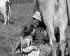 come mungere una vacca direttamente in bocca a un bambino