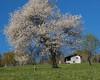 primavera nei dintorni del rifugio