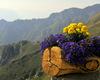 i bellissimi e colorati fiori del rifugio