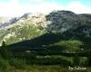 Alpe palu