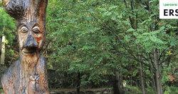 Percorsi tematici nella foresta di Canzo