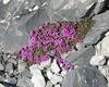 Flora e fauna al rifugio quinto alpini in alta valtellina parco nazionale dello stelvio gruppo ortles cevedale