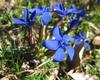 Punto di riferimento per gli appassionati botanici, al Medelet, grazie all'influenza del versante occidentale del Monte Guglielmo,potrete scoprire e fotografare un'infinità di specie arboree appartenenti alla tipica flora alpina.