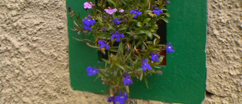 Feritoia fiorita presso il rifugio alpino al Passo di Cassana