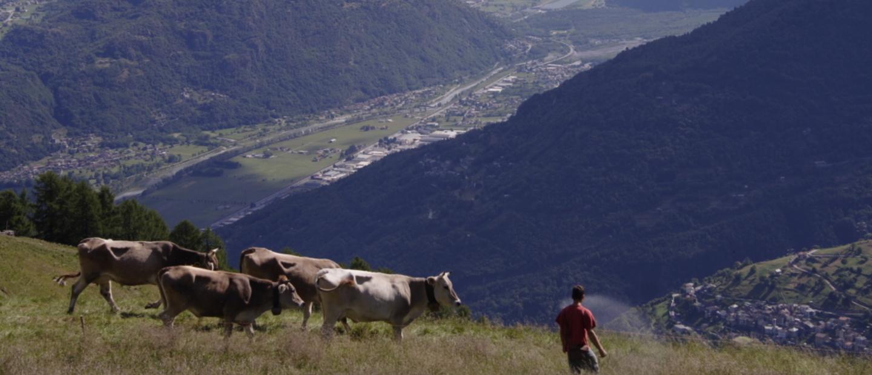 Alpe Culino
