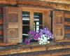 Una variegata fioritura abbellisce le finestre del rifugio Campo