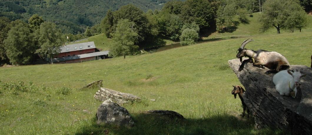 Alpe Comana