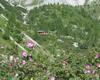 rifugio laeng e fiori